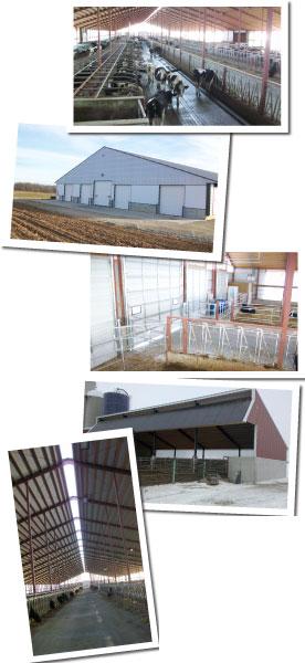 Freestall barns